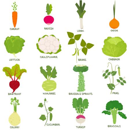 Conjunto de verduras para la ilustración de plantación complementaria - iconos de planificación de jardines vegetarianos - colección de diseño de alimentos orgánicos saludables
