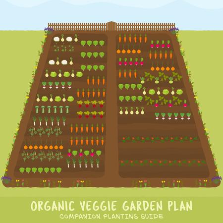 Organic veggie garden plan - companion planting guide - sowing planner - gardening organizer template Ilustrace