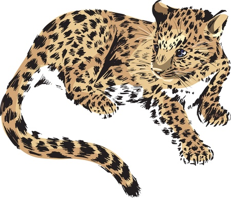 panther, cub of a wild cat Illustration