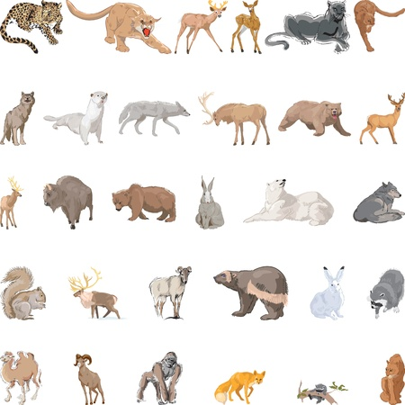 squirrel isolated: Wild Animals Set Illustration