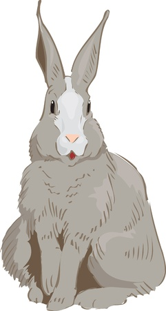 brown hare: Rabbit Drawn