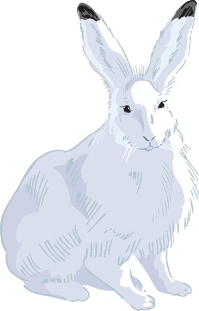 Rabbit Drawn 2 Stock Vector - 13262793