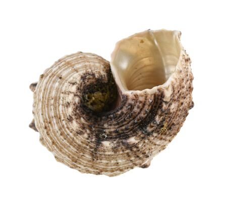 Empty sea shell isolated on white background