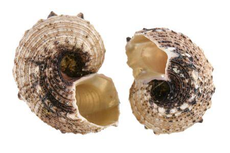 Empty sea shells isolated on white background