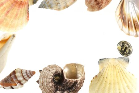 Frame from sea shells