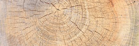 Cutted tree trunk