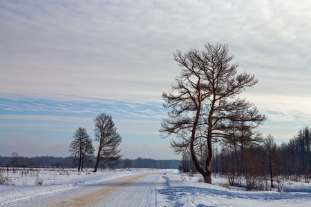 Winter road in the woods