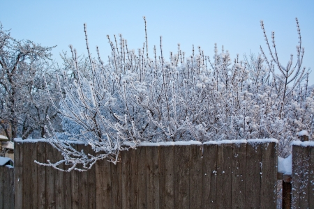 Fence with branches Stock Photo