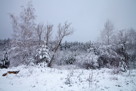 trees and grass in the forest covered with snow Stock Photo