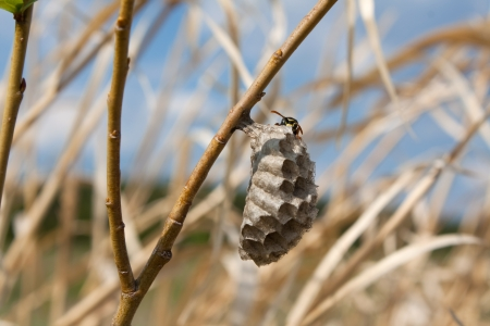 wasp nest in the grass Stock Photo