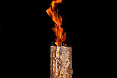 Burning pine log on a black background