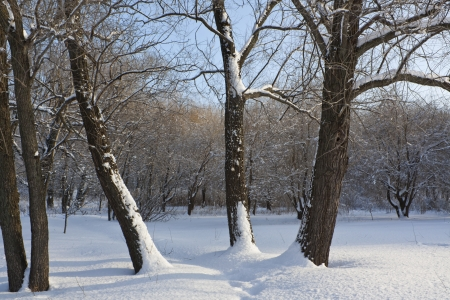 Three trees in the meadow under the snow Stock Photo