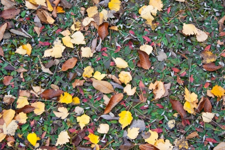Dry leaves on the grass