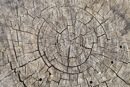 Background from the end of the log