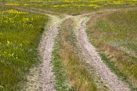A dirt road in a meadow with yellow flowers