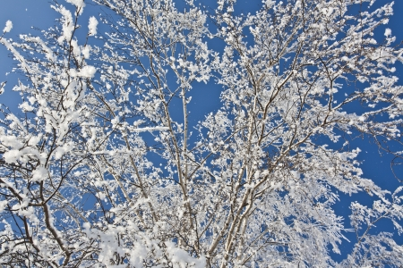 Snow on the branches of a birch against the sky