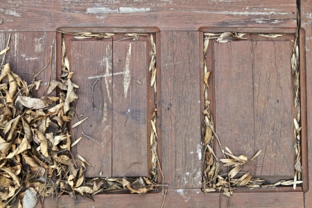 Dry leaves on the old wooden door photo
