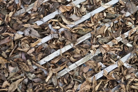 Dry leaves on old wooden lattice