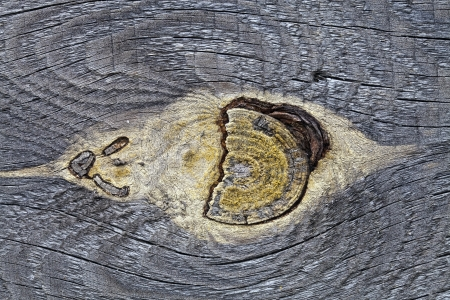 mote: Mote in the old pine board, photographed close up Stock Photo