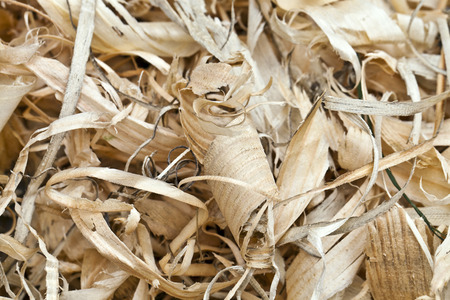wood shavings: Wood shavings obtained after processing the pine tree