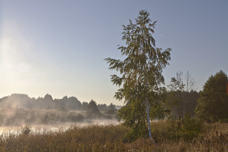 Fog on the forest lake during sunrise
