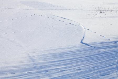 huellas de animales: Pistas animales y sombras en el r�o congelado cubierto de nieve.