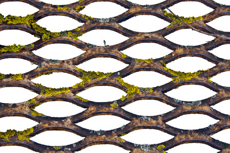 grille': Old rusty steel grille overgrown lichen photographed close up Stock Photo