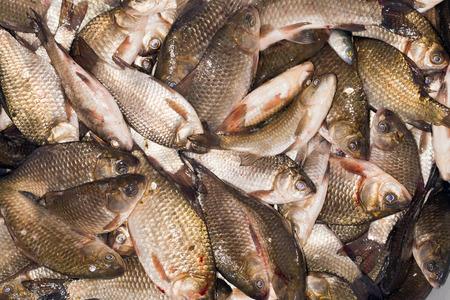 fresh water fish: Many small fresh water fish photographed close up