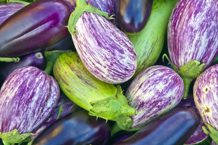 rural economy: Many eggplants different colors, photographed close up