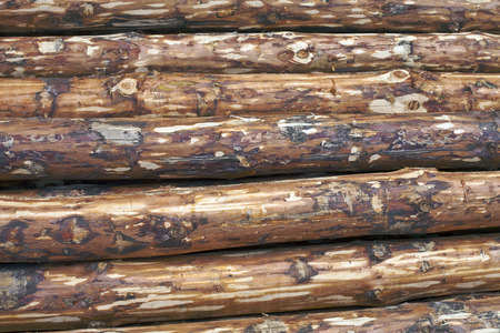 Background of pine logs with the bark removed