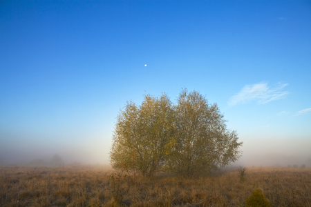 Two trees on a misty morning meadow against the blue sky