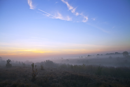 Meadow and bushes at sunrise in the fog in autumn