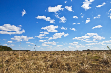 Dry grass in the sunny day in early autumn Stock Photo