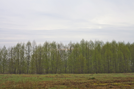 overcast: Young trees and green meadow overcast autumn morning Stock Photo