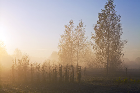 Sunrise under a clear sky in the village of misty autumn morning