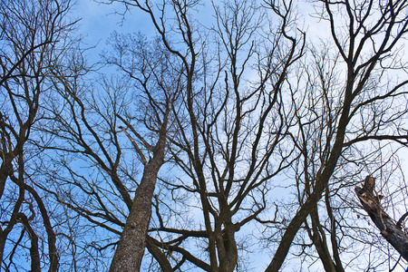 Dark silhouettes of trees against the blue sky Stock Photo