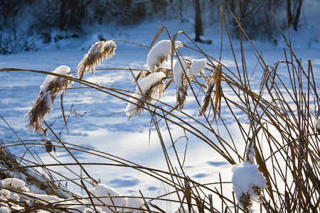 Dry reed in the snow on the shore the frozen river
