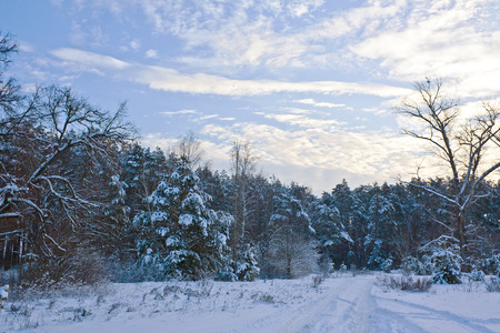 Track in the snow in the winter forest in the evening Stock Photo