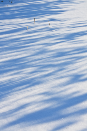 Shadows and the remnants of last years vegetation on the snow surface Stock Photo