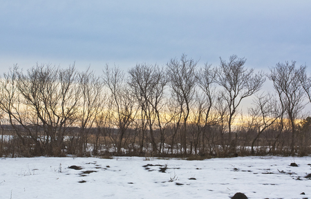 Silhouettes of the trees with a low sun on a cloudy March evening