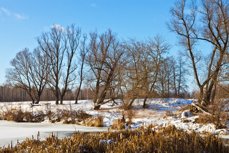 Trees and reeds on the banks of a frozen river