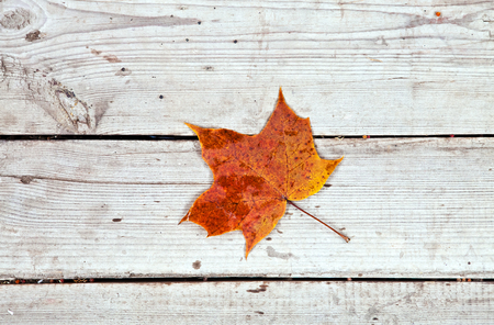 Dry maple leaf on old wooden floor