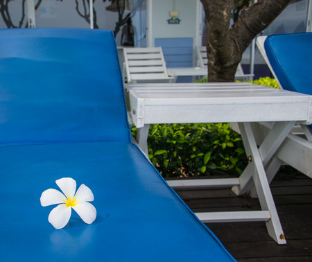 White Frangipani flower on chair in the swimming pool photo