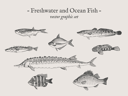 Dessins de dessins d'illustration vectorielle vintage de l'eau douce et de l'océan