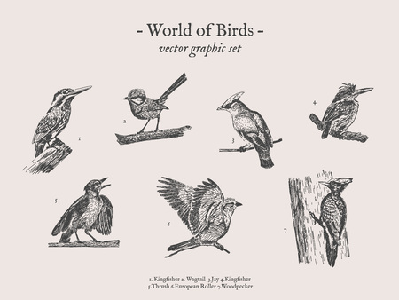 Birds drawings icon set 일러스트