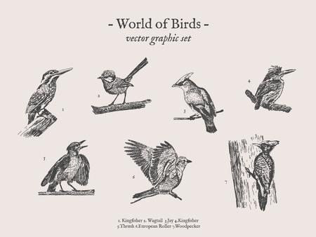 Birds drawings icon set Illustration