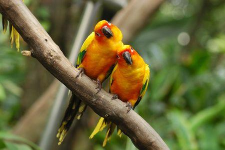aard vogels