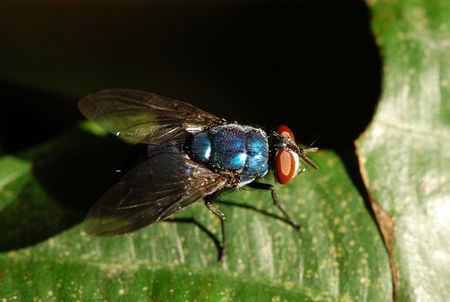 housefly: housefly in the parks