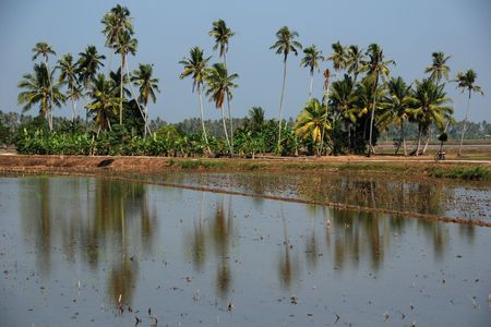 plough machine: coconut trees, water and paddy field in the countryside  Stock Photo
