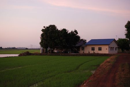 plough machine: paddy field, house and trees in the morning at countryside